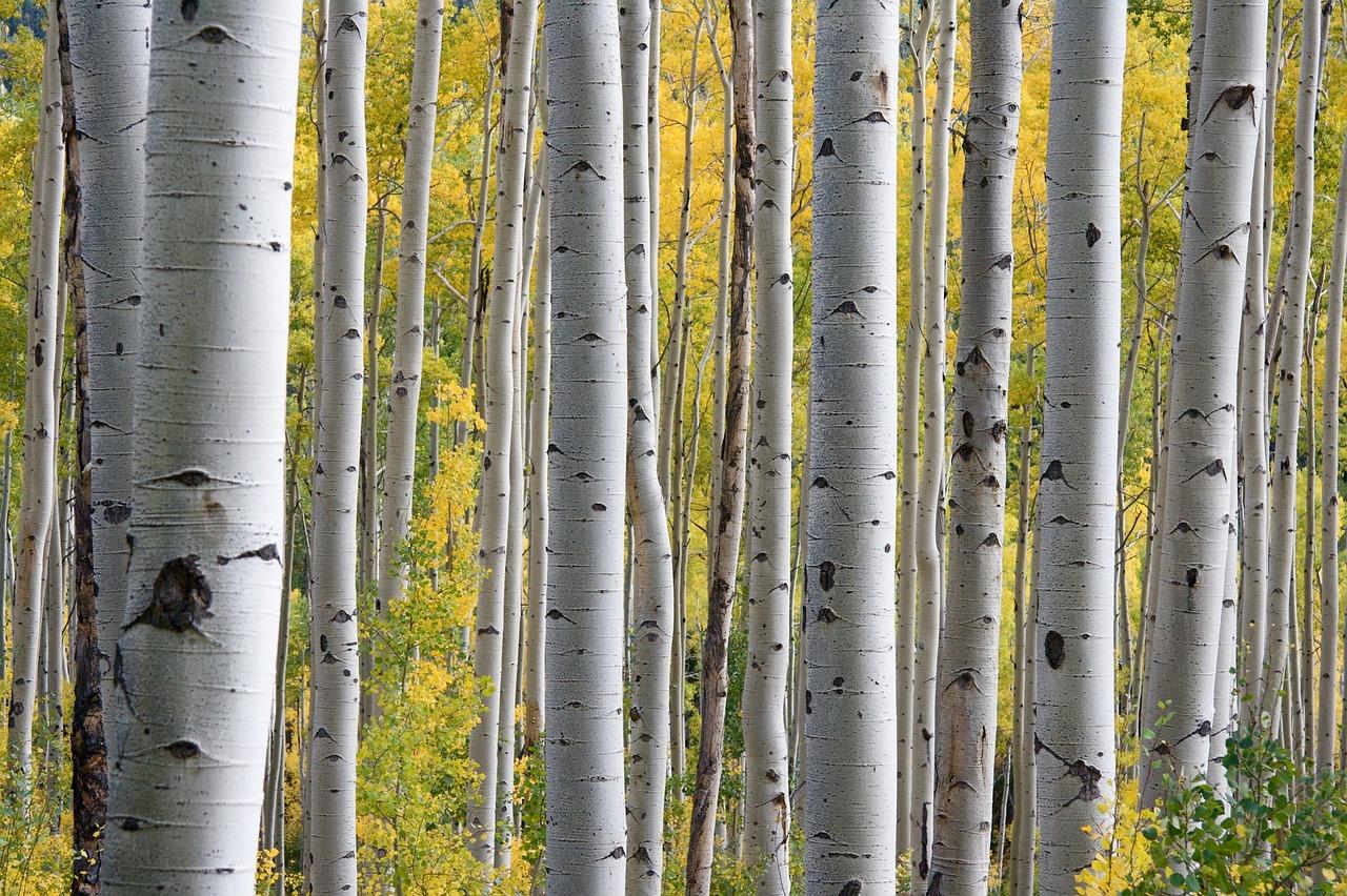 trees-690727_1280