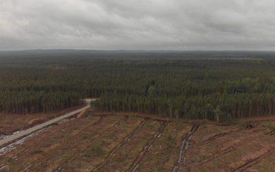 Le ministère des Forêts du Québec est-il à la solde de l'industrie?