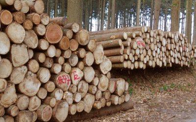 Étude de l'IRIS sur l'industrie forestière au Québec