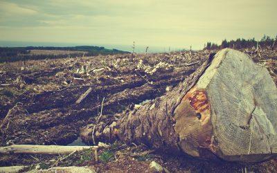 Lettre ouverte: la communauté scientifique est inquiète de la gestion des forêts au Québec