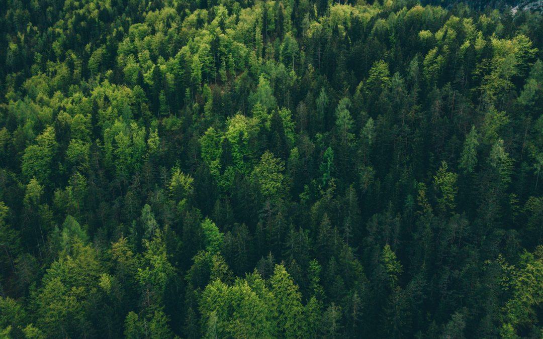 Dénonciation de la gestion forestière au Québec: réaction de l'Action boréale