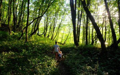Repenser notre relation aux forêts